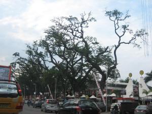 Pohoon-pohon gundul
